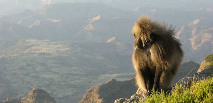 Simien Mountains - 1day tour