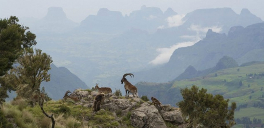 Simien National park - 7 days walking trip